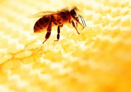 桑植县邹启锡养殖蜜蜂致富的创业故事