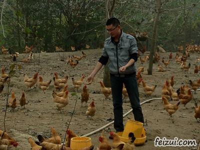 南京市刘春雨养鸡致富的创业故事