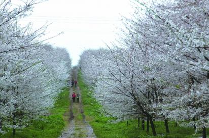 贵州省春季赏花和美食特产攻略