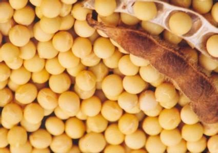 大豆异黄酮_大豆的产地