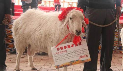 尉犁罗布羊肉