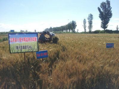 明仕亚洲国际备用网址_五原小麦