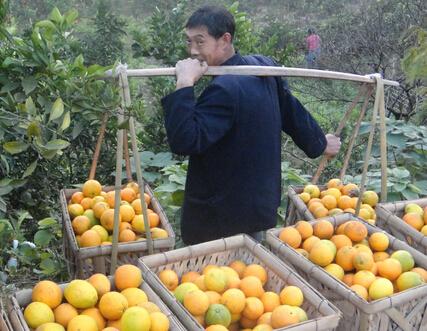 明仕亚洲国际娱乐_达县脐橙