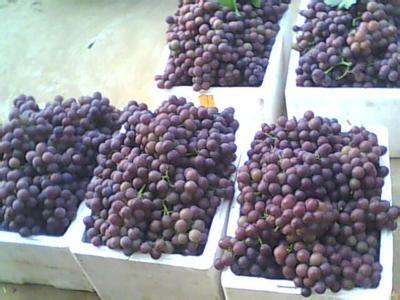 明仕亚洲国际备用网址_鸡泽葡萄