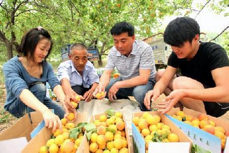 黄里笆斗杏