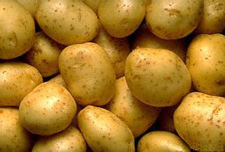 平海马铃薯