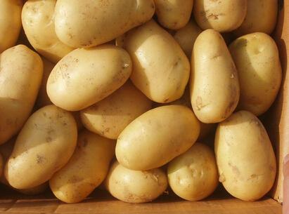 盐源马铃薯