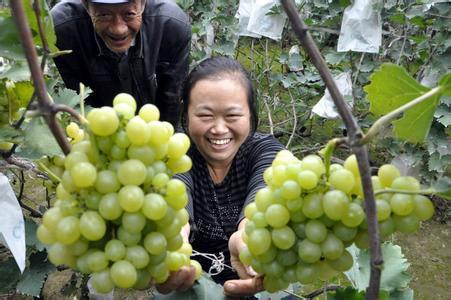 明仕亚洲国际备用网址_贾寨葡萄