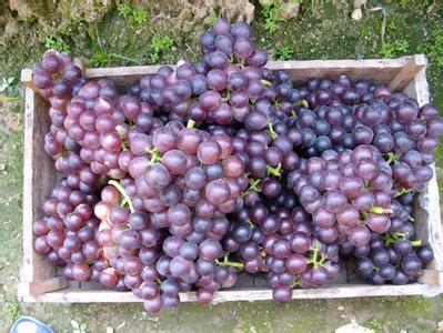 明仕亚洲_文水葡萄