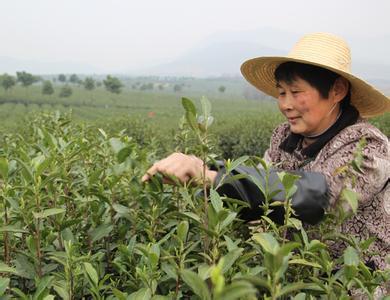 明仕亚洲国际娱乐_含山绿茶