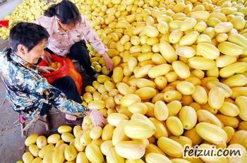 和县黄金瓜