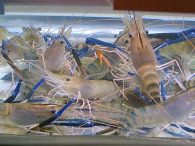 高邮罗氏沼虾