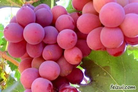 张掖红地球葡萄