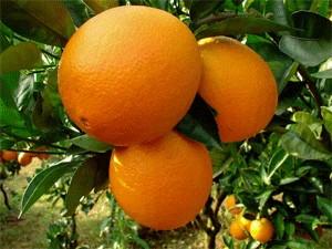 江西省信丰县――中国脐橙之乡