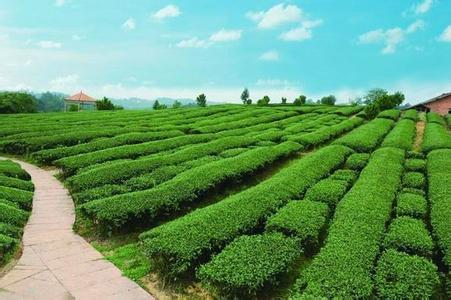 四川省蒲江县――中国绿茶之乡