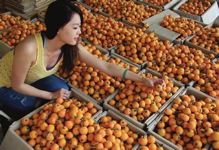 安徽省歙县――中国枇杷之乡