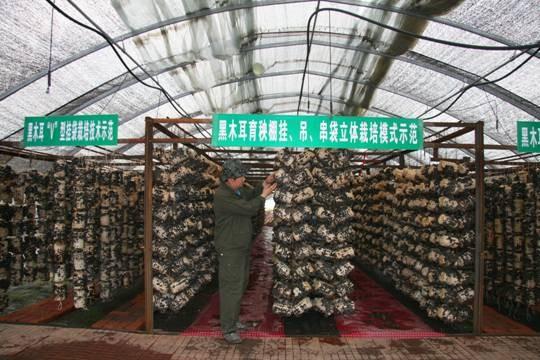 黑龙江省牡丹江市――中国食用菌之城