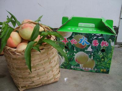 浙江省奉化市――中国水蜜桃之乡