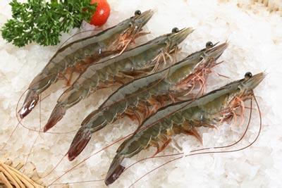 广东省湛江市――中国对虾之都