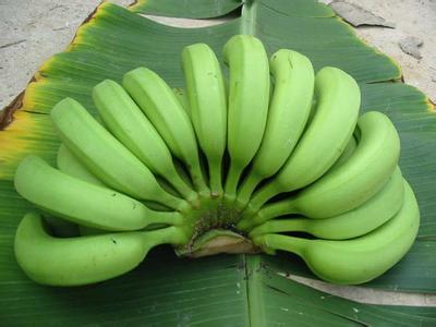 广西浦北县――中国香蕉之乡