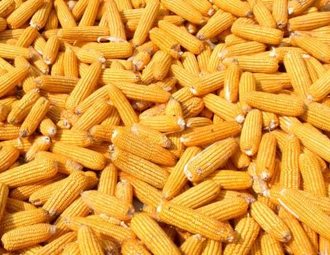 吉林省公主岭市――中国玉米之乡